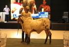Leilões movimentaram o segmento do agronegócio piauiense - Imagem 15