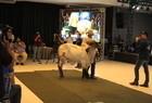 Leilões movimentaram o segmento do agronegócio piauiense - Imagem 12