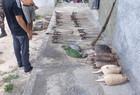 Caçadores são presos em flagrante com animais mortos no Piauí - Imagem 3
