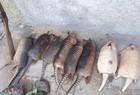 Caçadores são presos em flagrante com animais mortos no Piauí - Imagem 1
