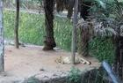 MP recomenda suspensão de transferência de animais do zoo - Imagem 4
