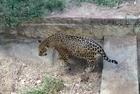 MP recomenda suspensão de transferência de animais do zoo - Imagem 3