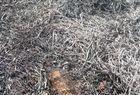 Imagens de animais mortos em incêndio não são de São Raimundo Nonato - Imagem 2
