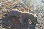 Imagens de animais mortos em incêndio não são de São Raimundo Nonato - Imagem 3