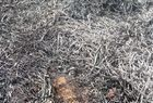 Imagens de animais mortos em incêndio não são de São Raimundo Nonato - Imagem 4