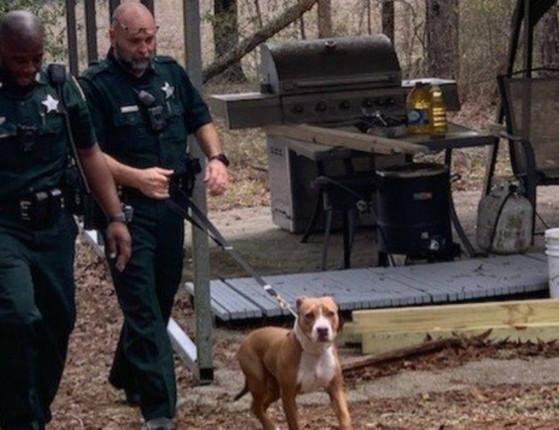 Criança se perde e pitbull a protege até ela ser achada pela polícia; foto