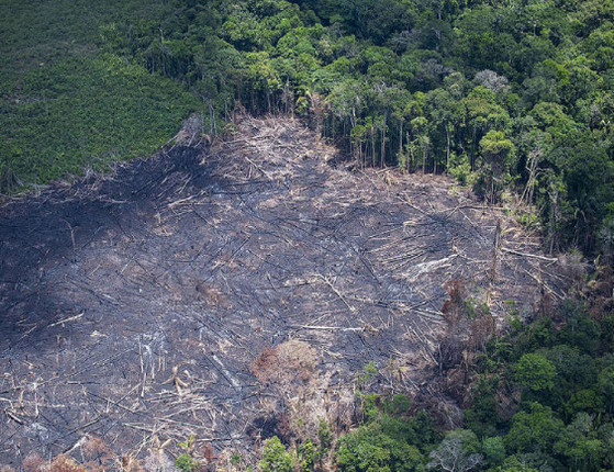 Cresce degradação ambiental, 48 anos após a conferência da ONU