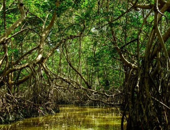 Ministério aprova 2 mudanças em regras de proteção de manguezais