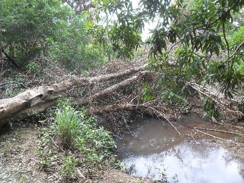 Rio Mulato apenas sobrevive com desmatamento e queimadas. Será o fim de uma história secular?