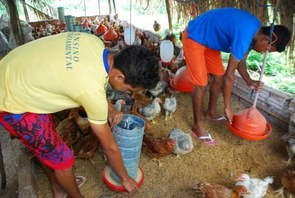 Famílias de assentamento criam galinhas caipiram e vão instalar abatedouro  - Imagem 4