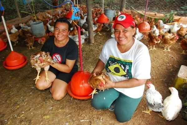 Famílias de assentamento criam galinhas caipiram e vão instalar abatedouro  - Imagem 2