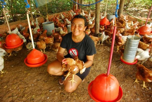 Famílias de assentamento criam galinhas caipiram e vão instalar abatedouro  - Imagem 1
