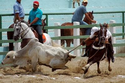 Vaquejada: Festa popular de grande movimentação nas férias da Fazenda Canafístula