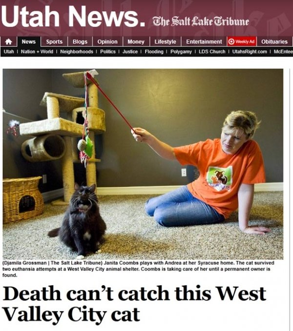 Gata sobrevive a duas tentativas de eutanásia nos EUA
