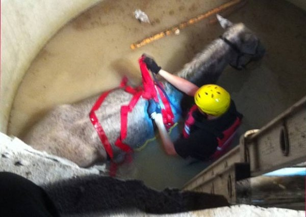 Cavalo é resgatado após cair em poço de 6 metros nos EUA