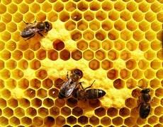Em novembro: Emater aplicará cursos de apicultura para assentados