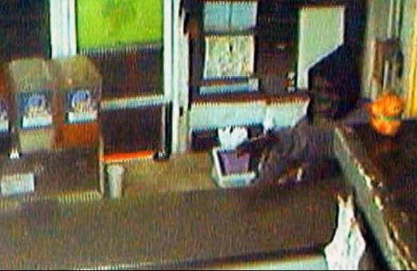 Bandido rouba restaurante nos EUA com máscara de gorila