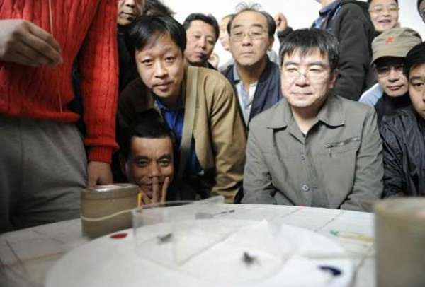 Chineses promovem briga de grilos