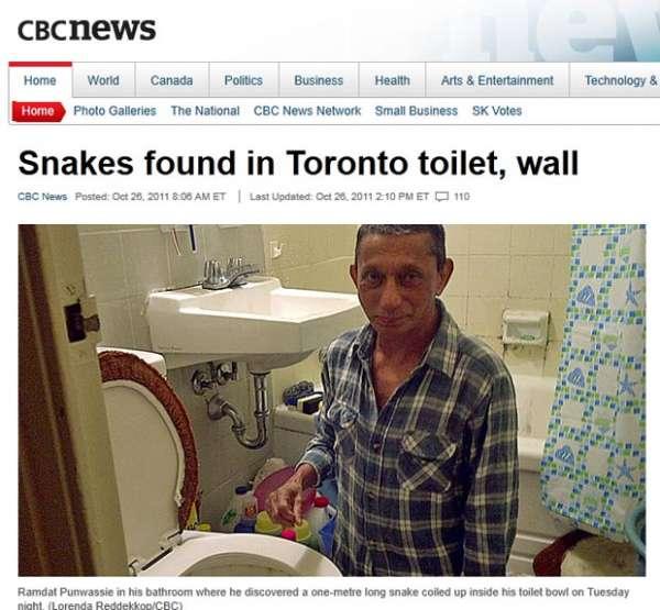 Homem acha cobra de 1 metro dentro da privada