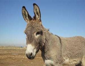 Zimbabuano diz estar apaixonado por prostituta que virou burro