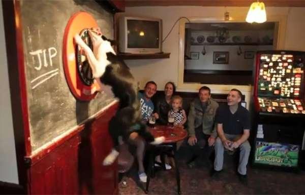 Cão faz sucesso em pub ao buscar dardos lançados em alvo