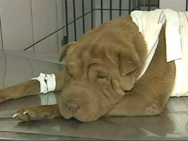 Cadela enfrenta bandido armado e salva familia