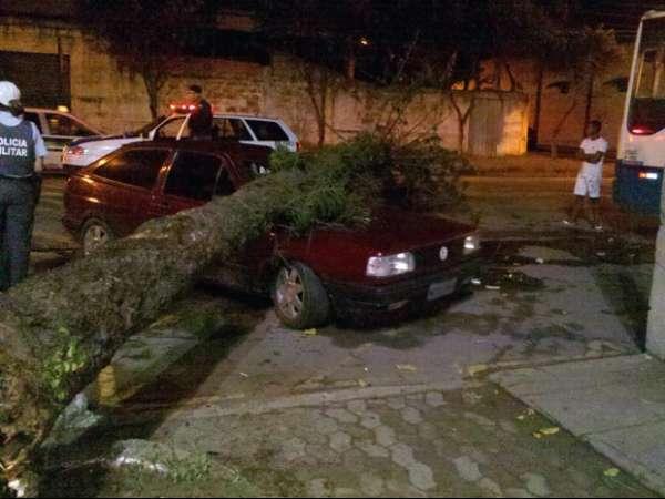Vento forte derruba árvore em cima de carro; ninguém se feriu