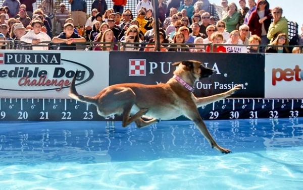 Cão bate recorde mundial com salto de quase 10 metros
