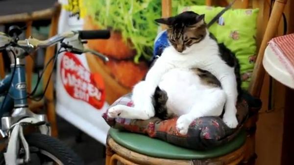 Gato tirando soneca atrai curiosos no Japão