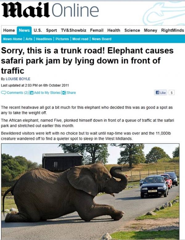 Elefante deita em rua e bloqueia trânsito em parque safári