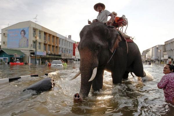 Centenas de pessoas morrem inundações na Tailândia; foto!