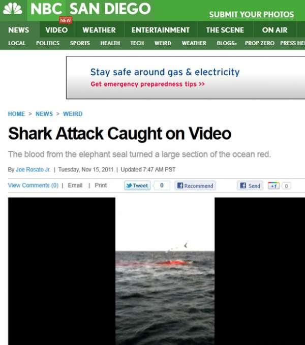 Turistas esperam ver baleias, mas flagram ataque de tubarão
