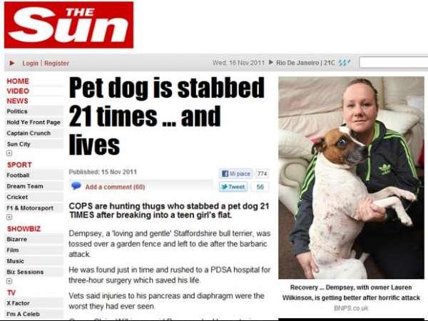 Cão sobrevive após levar 21 facadas em assalto no Reino Unido