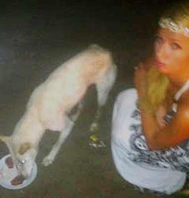 Paris Hilton compra bife de US$ 100 dólares para cachorro