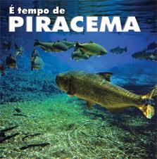Instituições realizarão Simpósio de defeso da Piracema