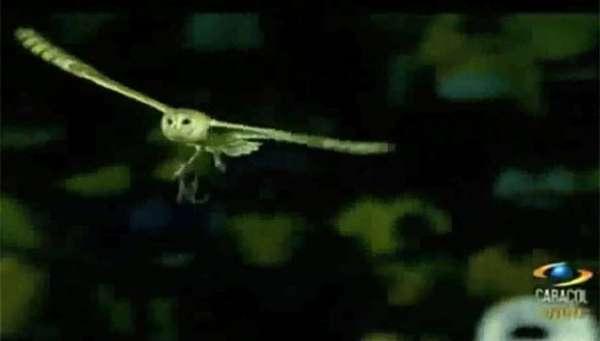 Coruja rouba a cena em jogo após pousar com rato em travessão