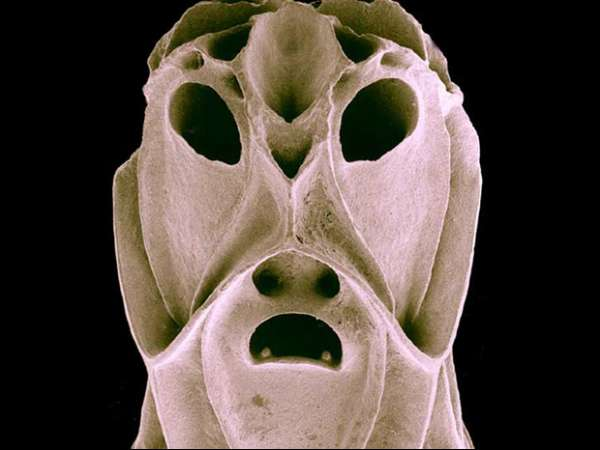 Microscópio revela \