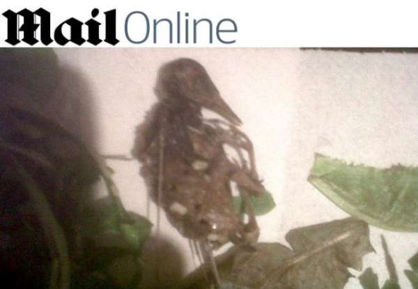 Família encontra passarinho morto em salada de supermercado