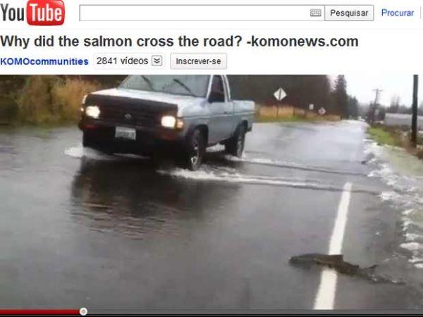 Peixes são flagrados atravessando rodovia inundada nos EUA