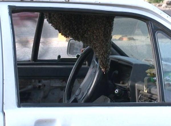 Milhares de abelhas invadem carro estacionado e homem corajoso ganha prêmio; fotos!