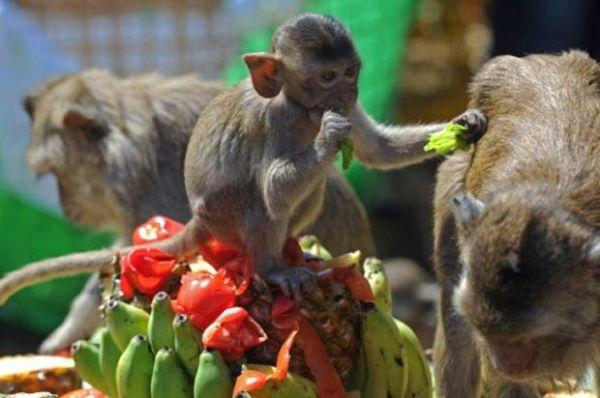Macaco é fotografado bebendo lata de refrigerante em festival tailandês