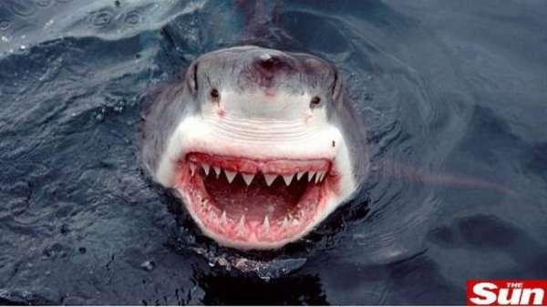 Fotógrafo registra tubarão-branco pronto para o ataque nas águas da África do Sul