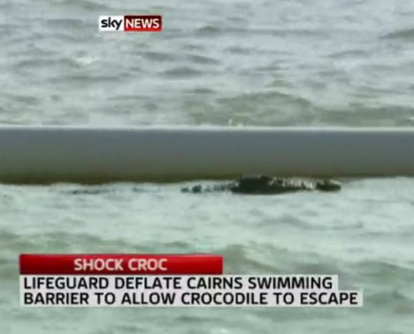 Crocodilo de 2,5 metros é visto em praia popular na Austrália