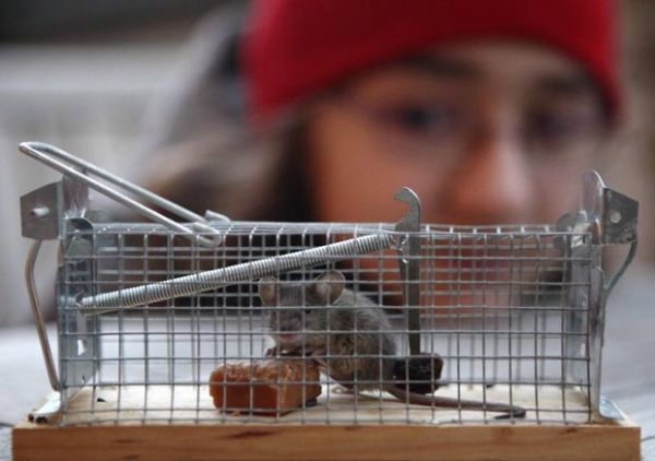Rato é capturado após causar transtornos em apartamento