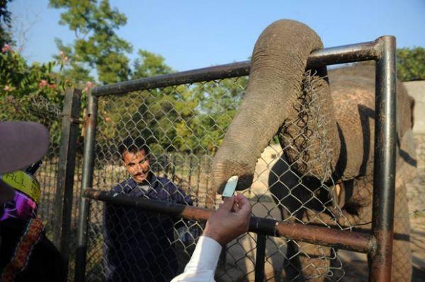 Elefante usa a tromba para pegar