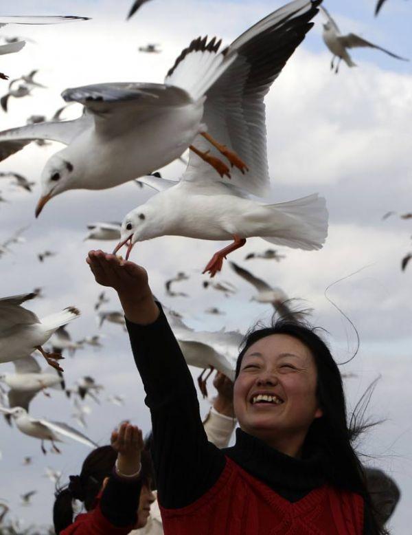 Gaivotas parecem parar no ar para pegar comida em pleno voo