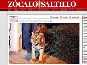 Tigresa solta nas ruas assusta moradores de cidade do México