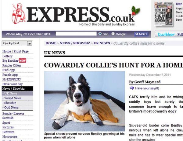 Com medo de gatos, cão ganha título de mais medroso do Reino Unido