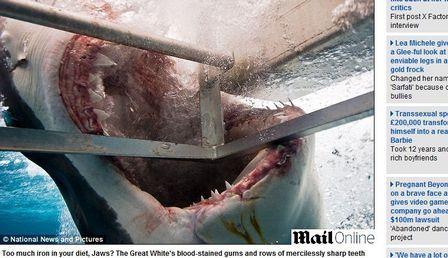 Fotógrafo registra tubarão-branco tentando mordê-lo