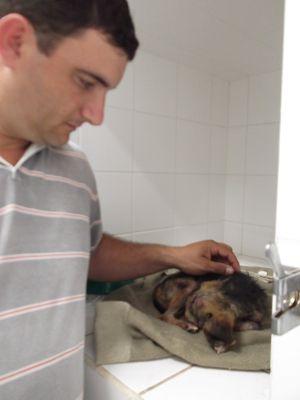 Situação de cão que ficou enterrado vivo por 12 h é gravíssima